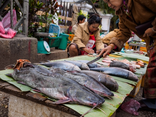 Fish at morning market, Luang Prabang
