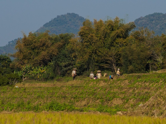 Working in the fields, Laos